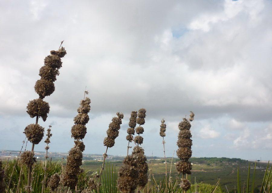 Las fotos de nuestra visita a El Puerto de Santa María: yacimiento fenicio de Doña Blanca y otras sorpresas