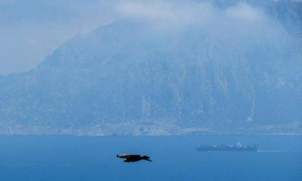 Una experiencia ornitológica en el Estrecho.