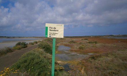 Una inmersión en el Parque Natural de la Bahía de Cádiz: el río Arillo