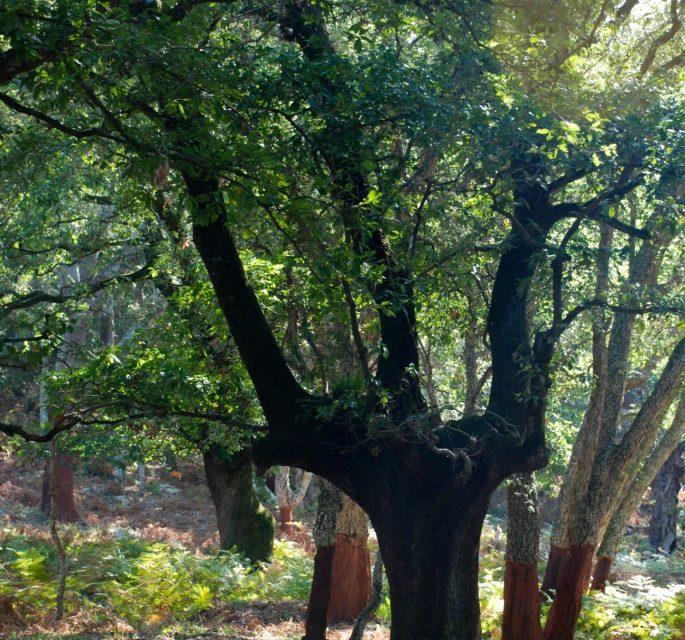 Retrato del otoño gaditano.