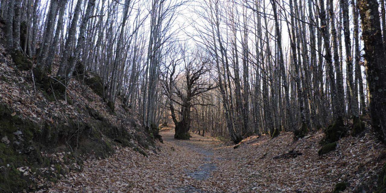 A Fala, Donosti y la Sierra de Gata.