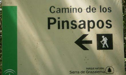 Regreso al Terciario (I). El Pinsapar de Grazalema.