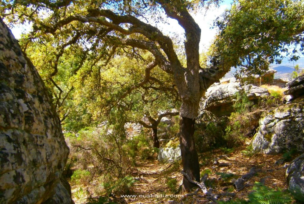 Santuario de Bacinete en el P. N. de los Alcornocales.