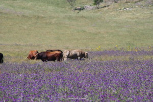 visita-dehesa-ganadería-euskádiz