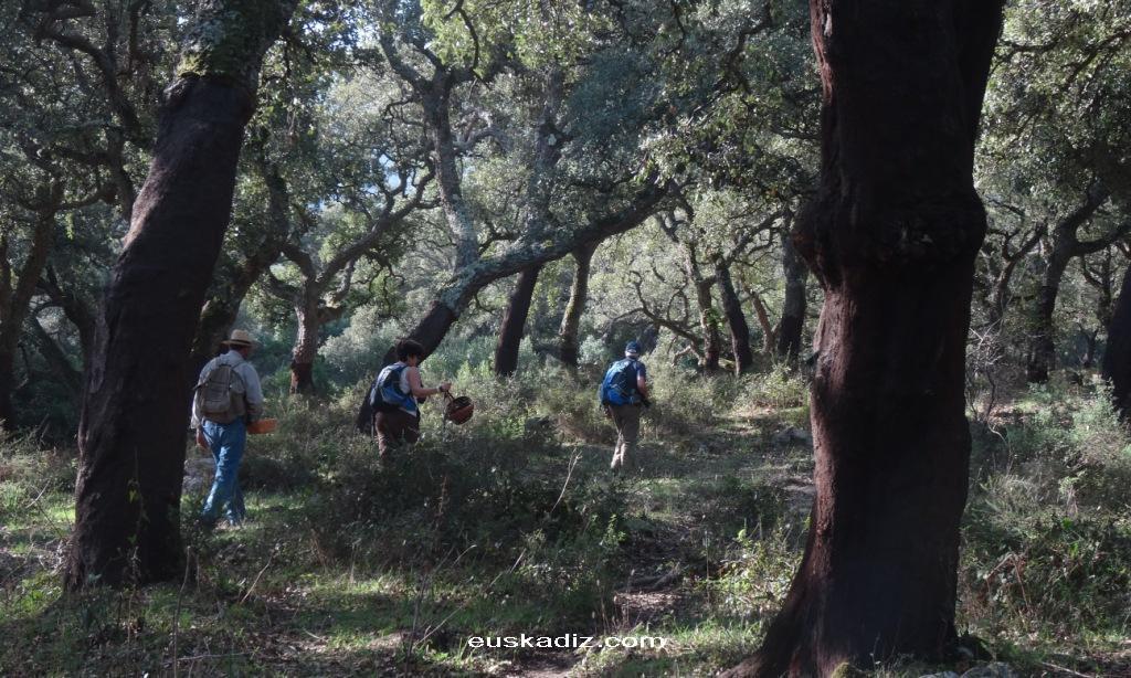 En el corazón del bosque: los Alcornocales