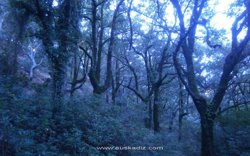El bosque encantado. La Sauceda.