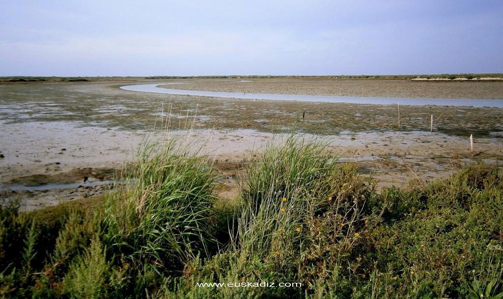 El caño mareal del río Arillo.