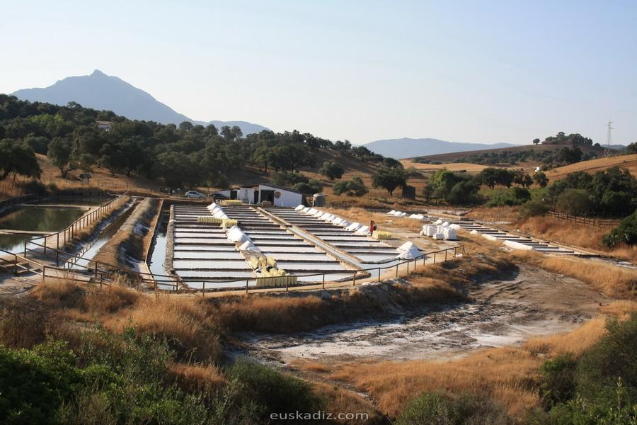 salinas-romanas-iptuci-euskadiz
