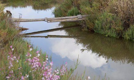 El Arsenal de La Carraca y el mundo de las algas