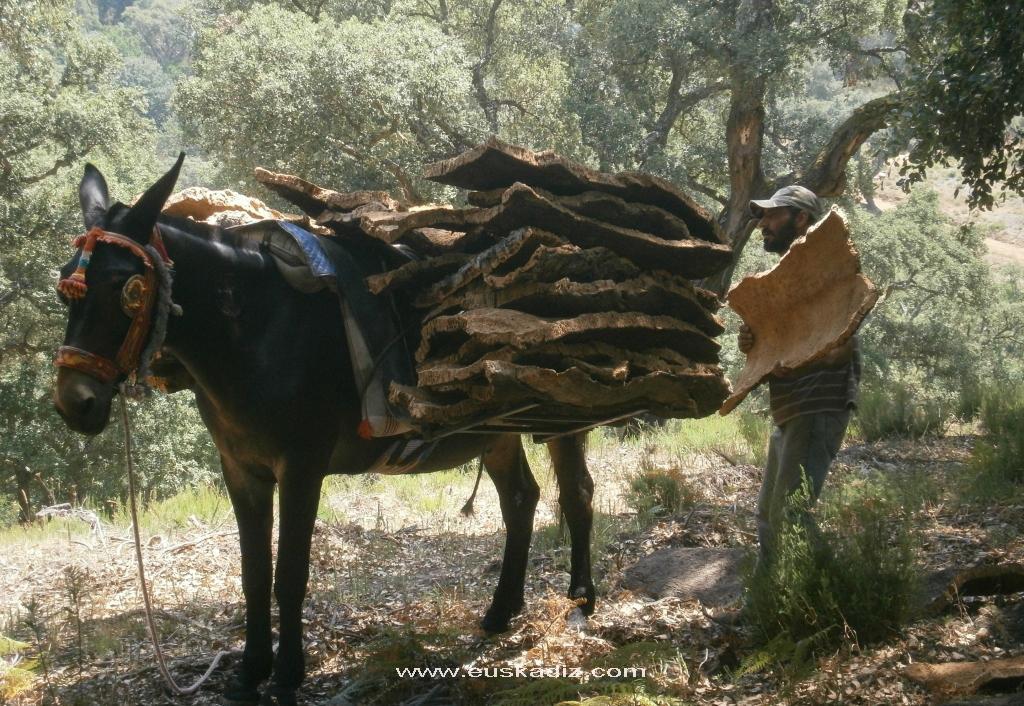 Cargando las mulas.