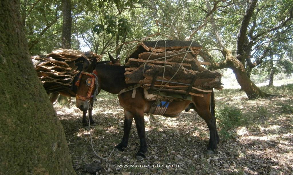 La reata de mulas con la carga.