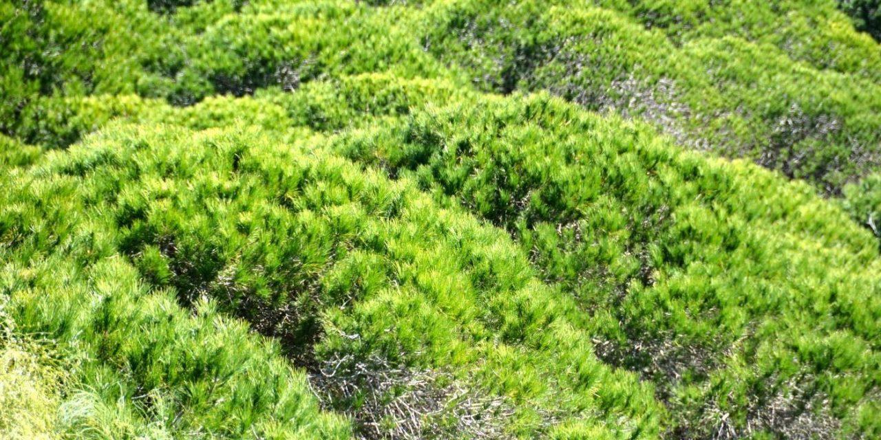 Parque Natural de la Breña y Marismas de Barbate.