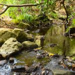 La última selva de Europa está en Tarifa.