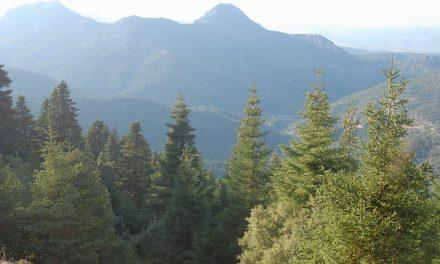 Senderismo por la Sierra de Grazalema